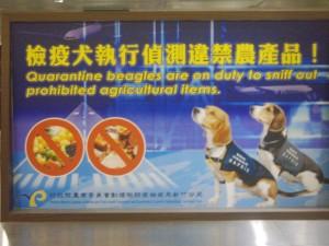 Quarantine Beagles.