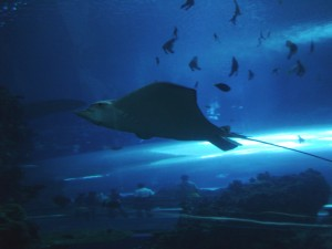 Underwater Tunnel and a Ray