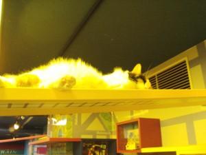 Highcat sleeping.