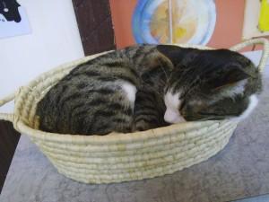 Basketcat sleeping.