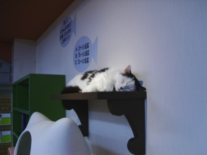 Shelfcat sleeping.