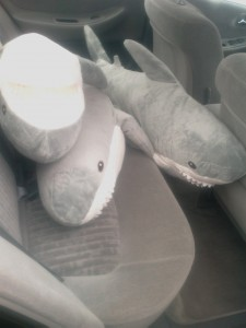 Sharks in the Backseat.